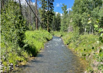 Stream running through vegetation and forested area.